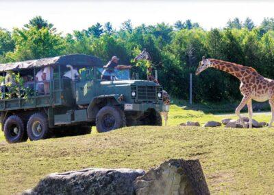 Safari-Expedition